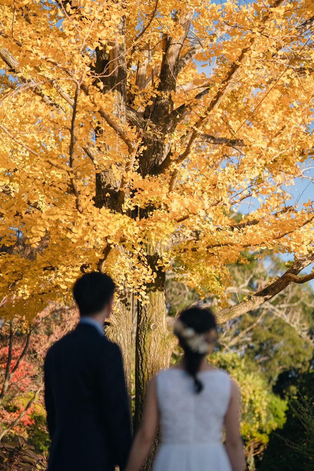 京都洋装前撮りカメラマン